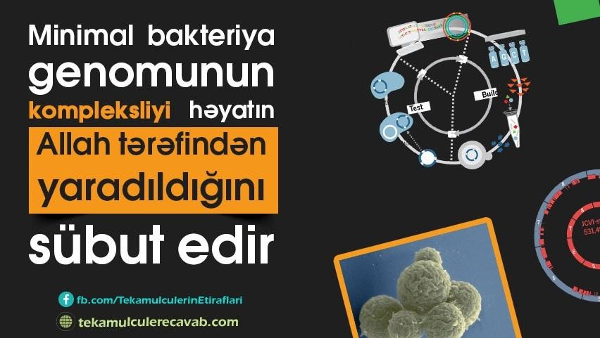 minimal-bakteriya2